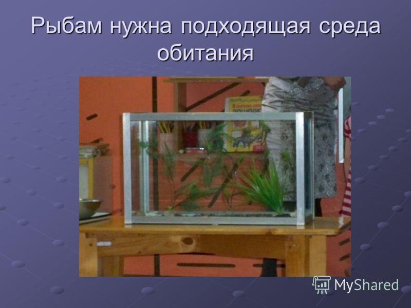 Рыбам нужна подходящая среда обитания