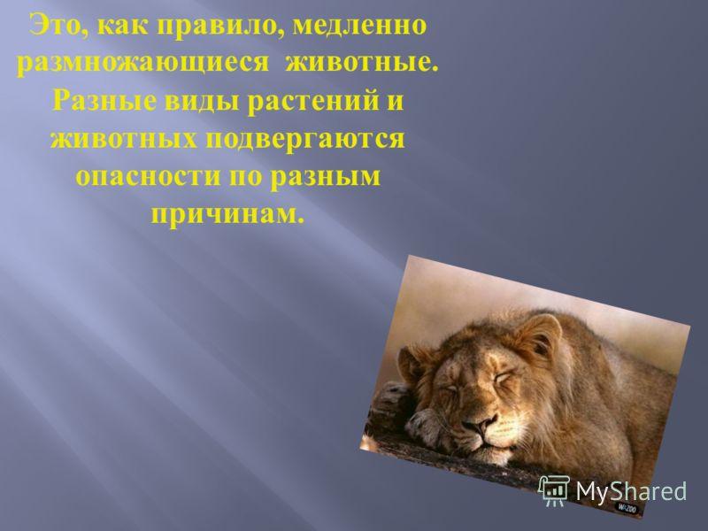 В течение всей истории жизни на Земле происходит медленное и естественное вымирание животных.