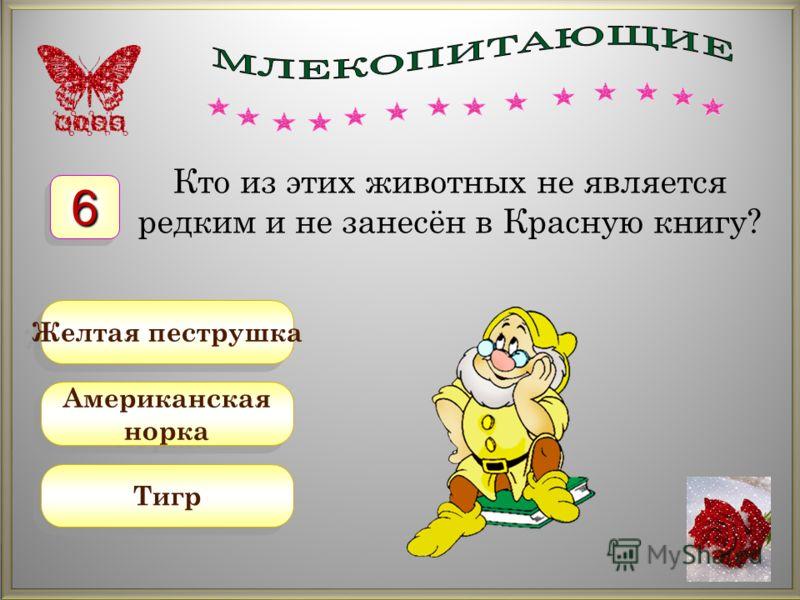 Американская норка Американская норка Желтая пеструшка Тигр Кто из этих животных не является редким и не занесён в Красную книгу? 66