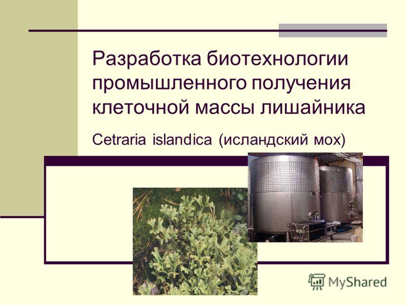 Разработка биотехнологии промышленного получения клеточной массы лишайника Cetraria islandica (исландский мох)