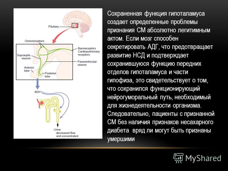 Сохраненная функция гипоталамуса создает определенные проблемы признания СМ абсолютно легитимным актом. Если мозг способен секретировать АДГ, что предотвращает развитие НСД и подтверждает сохранившуюся функцию передних отделов гипоталамуса и части ги