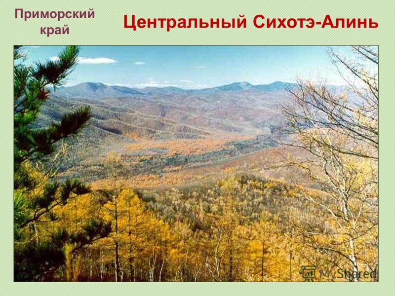 Центральный Сихотэ-Алинь Приморский край