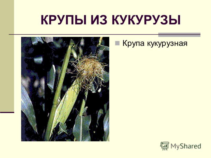КРУПЫ ИЗ КУКУРУЗЫ Крупа кукурузная