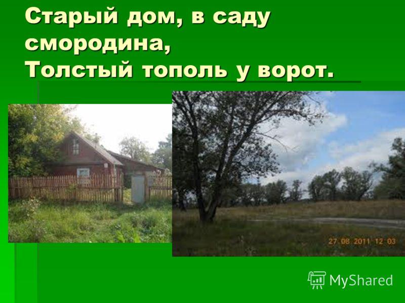 Старый дом, в саду смородина, Толстый тополь у ворот.