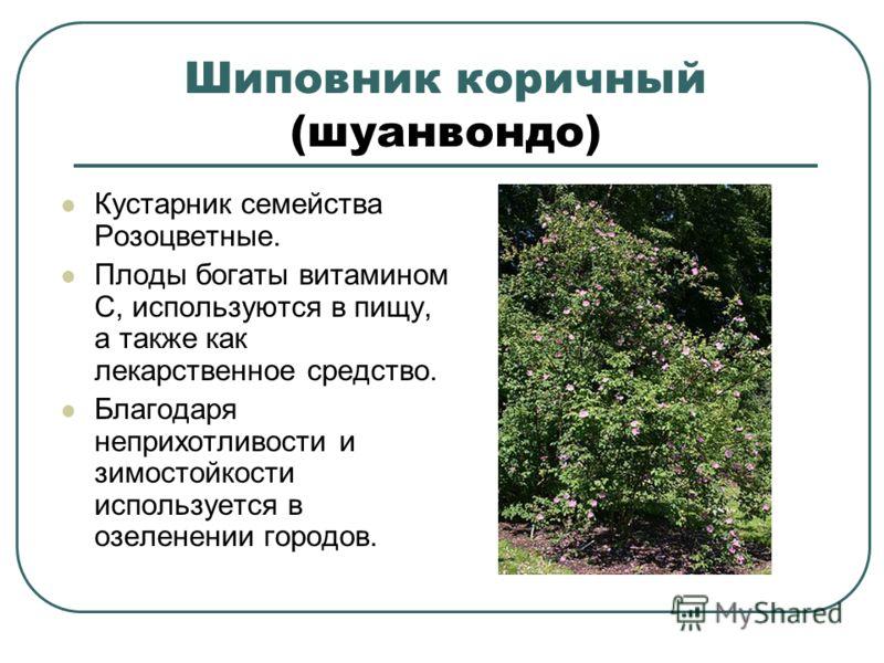 Шиповник коричный (шуанвондо) Кустарник семейства Розоцветные. Плоды богаты витамином C, используются в пищу, а также как лекарственное средство. Благодаря неприхотливости и зимостойкости используется в озеленении городов.