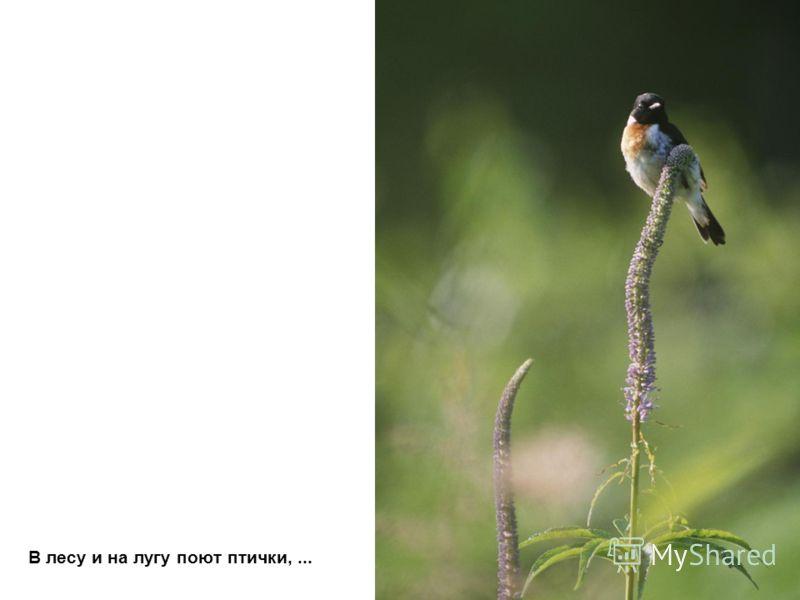 В лесу и на лугу поют птички,...