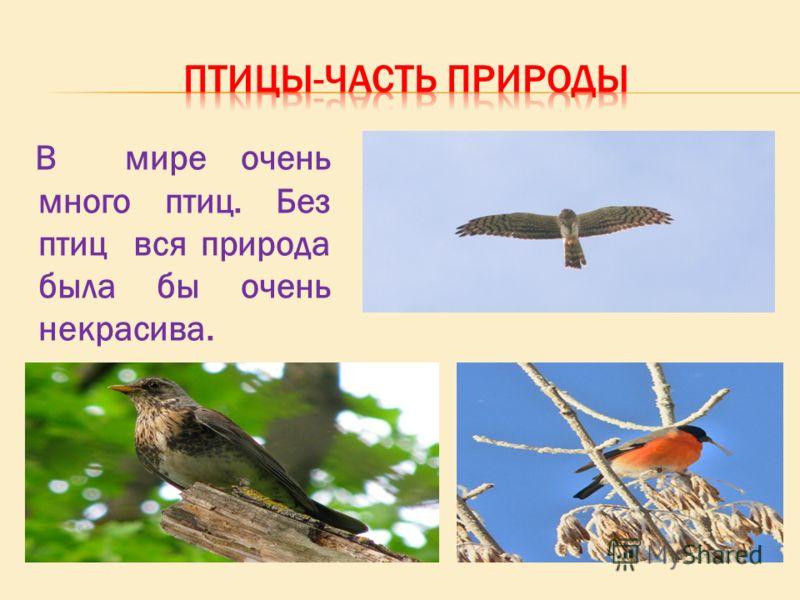 В мире очень много птиц. Без птиц вся природа была бы очень некрасива.