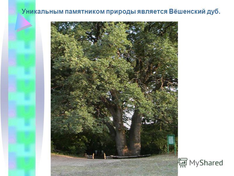 Уникальным памятником природы является Вёшенский дуб.