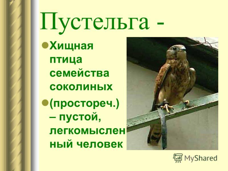 Пустельга - Хищная птица семейства соколиных (простореч.) – пустой, легкомыслен ный человек