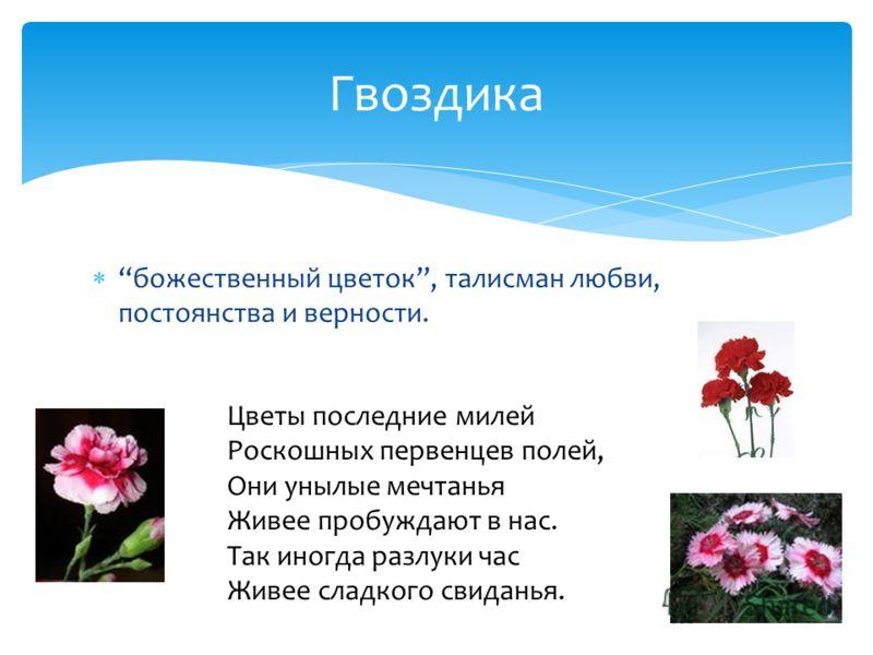 божественный цветок, талисман любви, постоянства и верности. Гвоздика Цветы последние милей Роскошных первенцев полей, Они унылые мечтанья Живее пробуждают в нас. Так иногда разлуки час Живее сладкого свиданья.