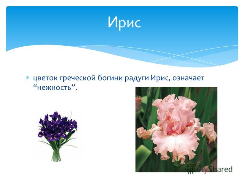 цветок греческой богини радуги Ирис, означает нежность. И рис