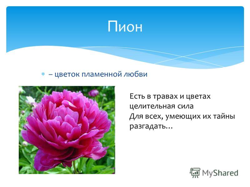 – цветок пламенной любви П ион Есть в травах и цветах целительная сила Для всех, умеющих их тайны разгадать…