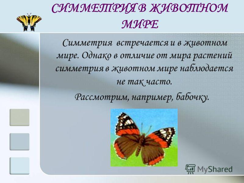 СИММЕТРИЯ В ЖИВОТНОМ МИРЕ Симметрия встречается и в животном мире. Однако в отличие от мира растений симметрия в животном мире наблюдается не так часто. Рассмотрим, например, бабочку.