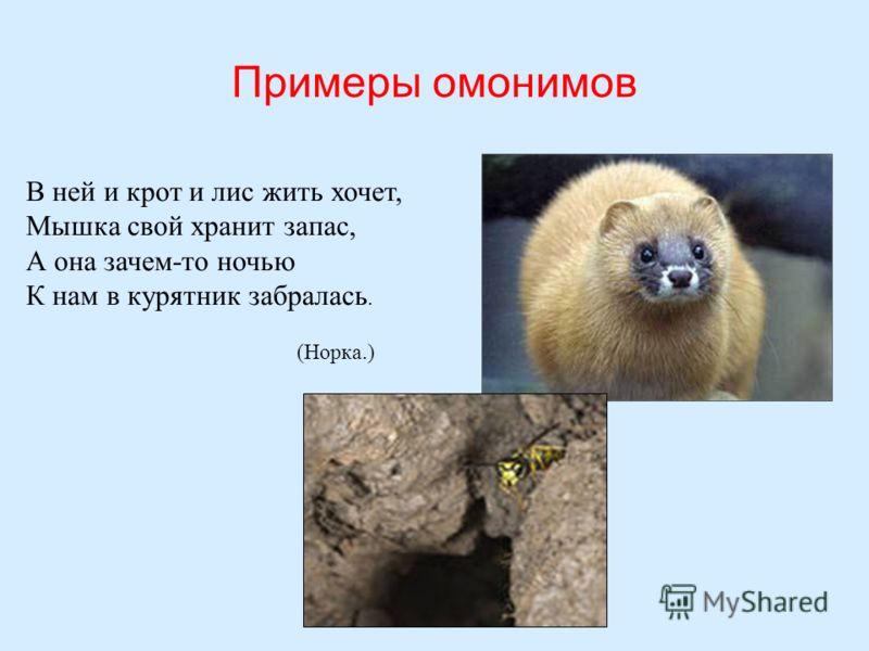 Примеры омонимов В ней и крот и лис жить хочет, Мышка свой хранит запас, А она зачем-то ночью К нам в курятник забралась. (Норка.)