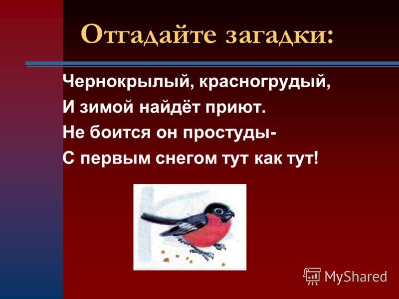 Чернокрылый, красногрудый, И зимой найдёт приют. Не боится он простуды- С первым снегом тут как тут!