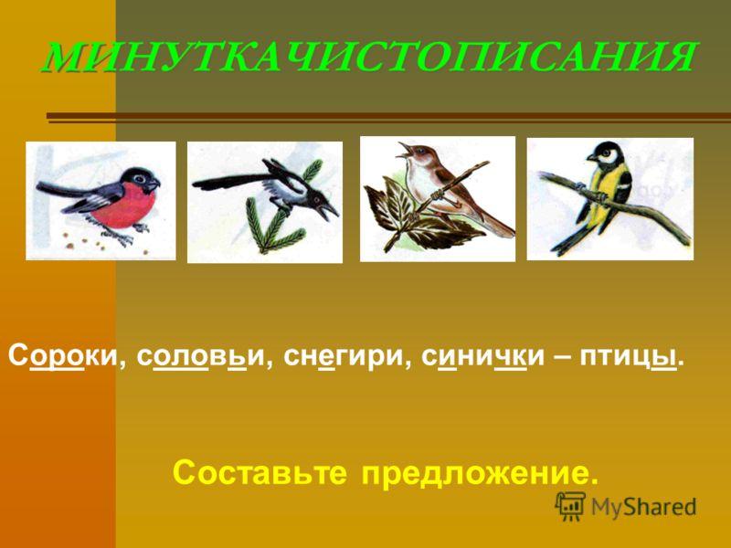 МИНУТКАЧИСТОПИСАНИЯ Сороки, соловьи, снегири, синички – птицы. Составьте предложение.