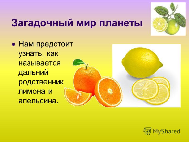 Загадочный мир планеты Нам предстоит узнать, как называется дальний родственник лимона и апельсина.