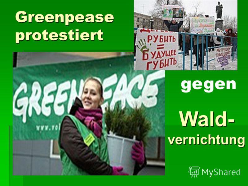 Greenpease protestiert gegen Wald gegen Wald Wald- Wald-vernichtung gegen