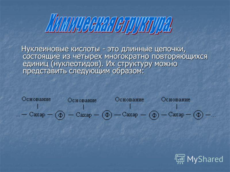 Нуклеиновые кислоты - это длинные цепочки, состоящие из четырех многократно повторяющихся единиц (нуклеотидов). Их структуру можно представить следующим образом: Нуклеиновые кислоты - это длинные цепочки, состоящие из четырех многократно повторяющихс