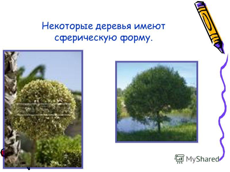 Некоторые деревья имеют сферическую форму.