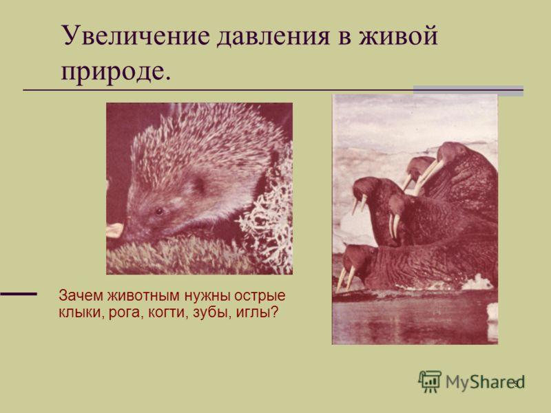 9 Зачем животным нужны острые клыки, рога, когти, зубы, иглы? Увеличение давления в живой природе.