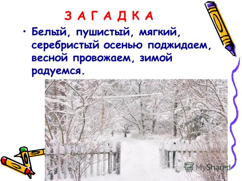 З А Г А Д К А Белый, пушистый, мягкий, серебристый осенью поджидаем, весной провожаем, зимой радуемся.