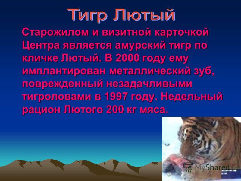 Старожилом и визитной карточкой Центра является амурский тигр по кличке Лютый. В 2000 году ему имплантирован металлический зуб, поврежденный незадачливыми тигроловами в 1997 году. Недельный рацион Лютого 200 кг мяса.