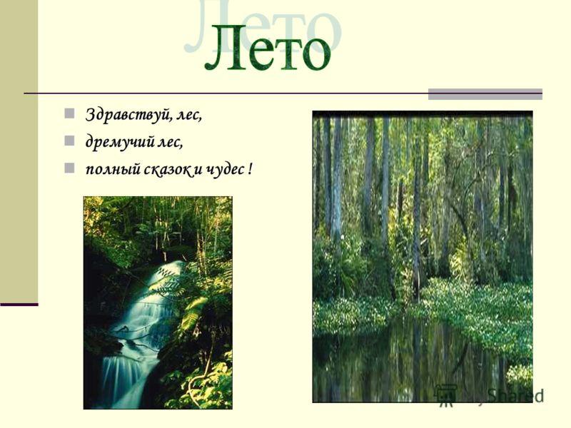 Здравствуй лес здравствуй лес