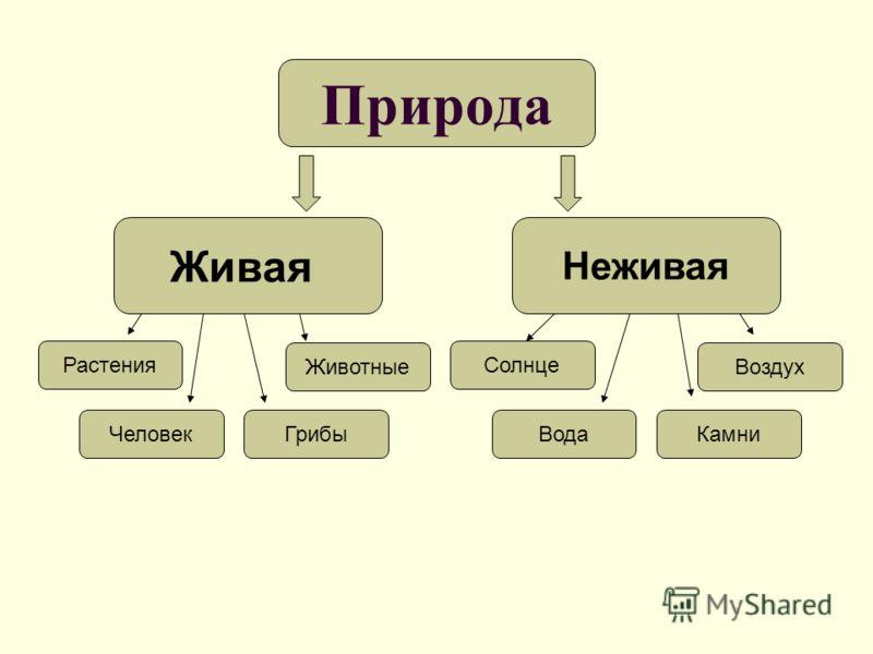 zhivaya-i-nezhivaya-priroda-doklad-prezentatsiya-4-klass