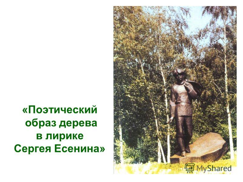 «Поэтический образ дерева в лирике Сергея Есенина»