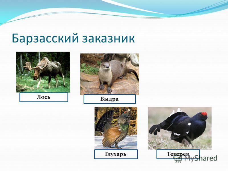 Лось Выдра ГлухарьТетерев
