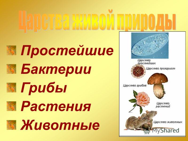 Простейшие Бактерии Грибы Растения Животные