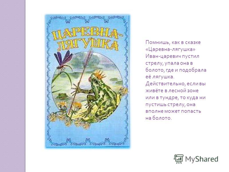Помнишь, как в сказке « Царевна - лягушка » Иван - царевич пустил стрелу, упала она в болото, где и подобрала её лягушка. Действительно, если вы живёте в лесной зоне или в тундре, то куда ни пустишь стрелу, она вполне может попасть на болото.