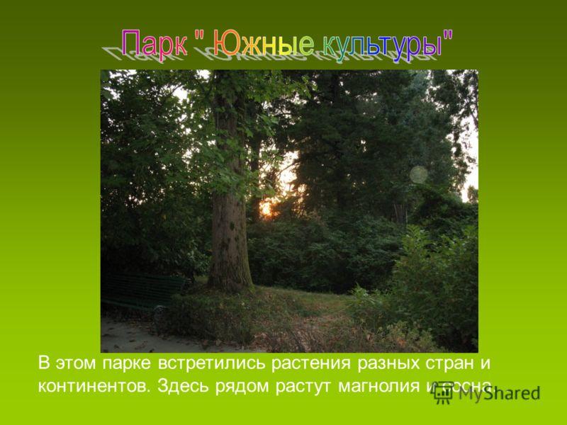 В этом парке встретились растения разных стран и континентов. Здесь рядом растут магнолия и сосна…