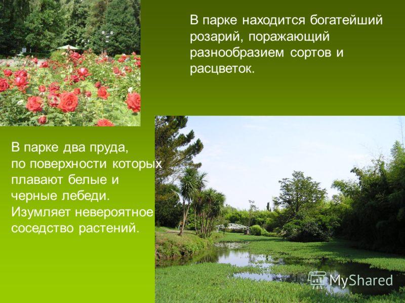 В парке находится богатейший розарий, поражающий разнообразием сортов и расцветок. В парке два пруда, по поверхности которых плавают белые и черные лебеди. Изумляет невероятное соседство растений.