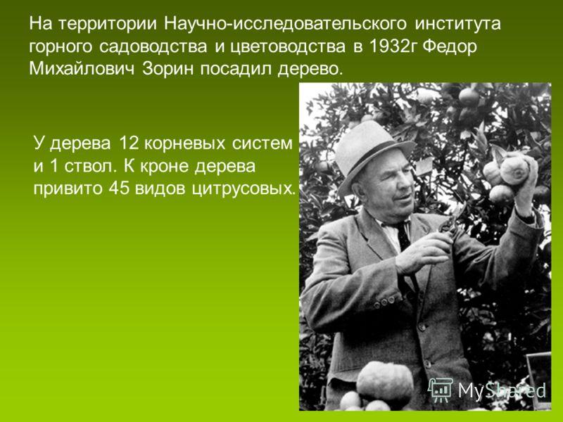 На территории Научно-исследовательского института горного садоводства и цветоводства в 1932г Федор Михайлович Зорин посадил дерево. У дерева 12 корневых систем и 1 ствол. К кроне дерева привито 45 видов цитрусовых.