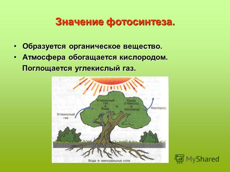 Значение фотосинтеза. Образуется органическое вещество.Образуется органическое вещество. Атмосфера обогащается кислородом.Атмосфера обогащается кислородом. Поглощается углекислый газ. Поглощается углекислый газ.