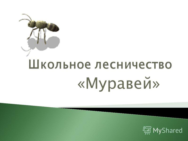«Муравей»