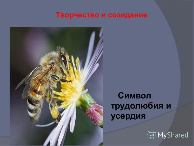 - воспитание трудолюбия, творческого отношения к учению, труду, жизни; 3 НАПРАВЛЕНИЕ