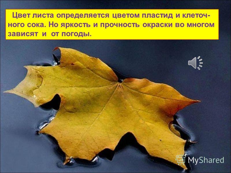 Бывает, что листья начинают желтеть задолго до осенних дней. Иногда желтые листья на деревьях и кустарниках появляются еще в середине лета, особенно когда сухо и жарко.