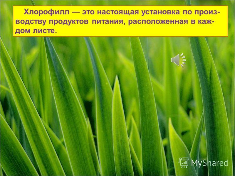 Все листья содержат в себе хлорофилл. Это удивительное зелёное вещество, которое обеспечивает человека и животных растительной пищей. Он очень важен для нашей жизни!
