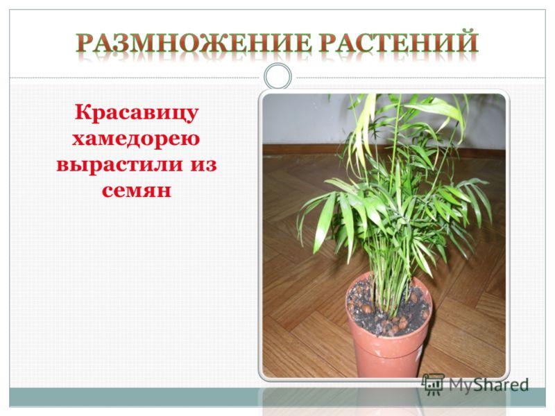 Это декоративное растение было выращено из листового черенка Толстянка