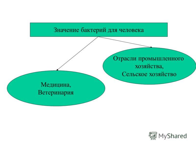 Значение бактерий для человека Медицина, Ветеринария Отрасли промышленного хозяйства, Сельское хозяйство