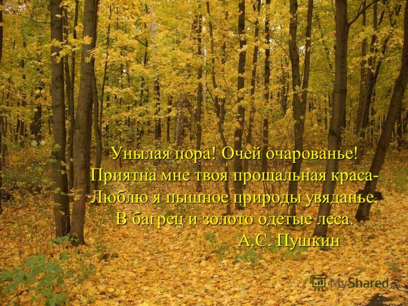 Унылая пора! Очей очарованье! Приятна мне твоя прощальная краса- Люблю я пышное природы увяданье, В багрец и золото одетые леса. А.С. Пушкин