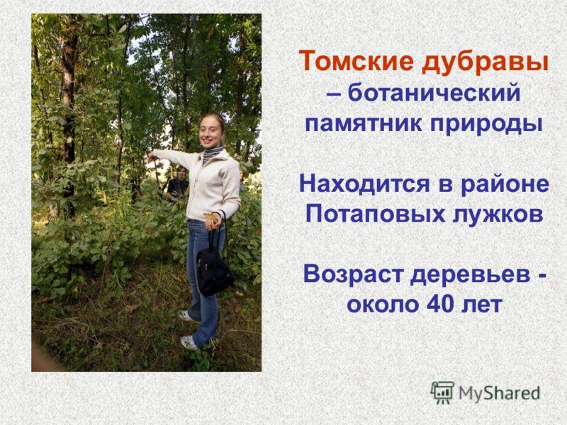 Томские дубравы – ботанический памятник природы Находится в районе Потаповых лужков Возраст деревьев - около 40 лет