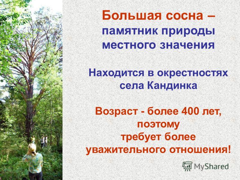 Большая сосна – памятник природы местного значения Находится в окрестностях села Кандинка Возраст - более 400 лет, поэтому требует более уважительного отношения!