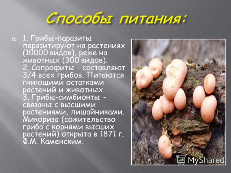 1. Грибы-паразиты паразитируют на растениях (10000 видов), реже на животных (300 видов). 2. Сапрофиты - составляют 3/4 всех грибов. Питаются гниющими остатками растений и животных. 3. Грибы-симбионты - связаны с высшими растениями, лишайниками. Микор