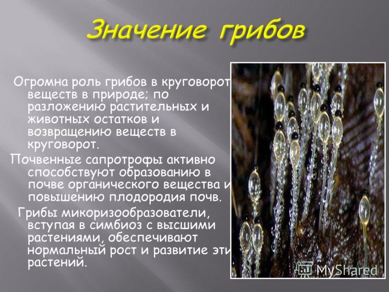 Огромна роль грибов в круговороте веществ в природе; по разложению растительных и животных остатков и возвращению веществ в круговорот. Почвенные сапротрофы активно способствуют образованию в почве органического вещества и повышению плодородия почв.