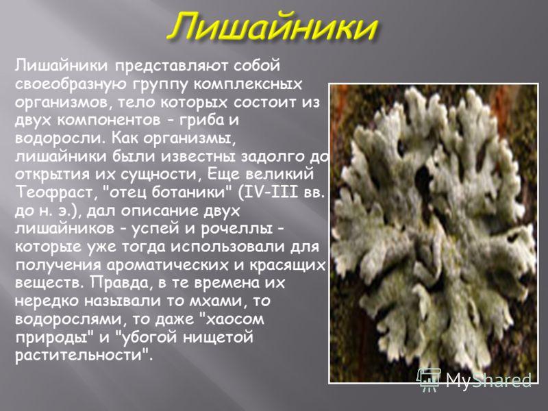 Лишайники представляют собой своеобразную группу комплексных организмов, тело которых состоит из двух компонентов - гриба и водоросли. Как организмы, лишайники были известны задолго до открытия их сущности, Еще великий Теофраст,