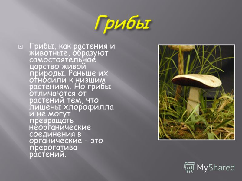 Грибы, как растения и животные, образуют самостоятельное царство живой природы. Раньше их относили к низшим растениям. Но грибы отличаются от растений тем, что лишены хлорофилла и не могут превращать неорганические соединения в органические - это пре
